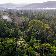 Kleut peat swamp forest, Suaq Balimbing, Leuser Ecosystem, Sumatra, Indonesia Forest cover, Leuser Ecosystem, Sumatra, Indonesia. The Leuser Ecosystem is home to the largest extent of intact forest landscapes remaining in Sumatra and it is among the most biologically abundant landscapes ever described. Photo: Paul Hilton for Earth Tree Images