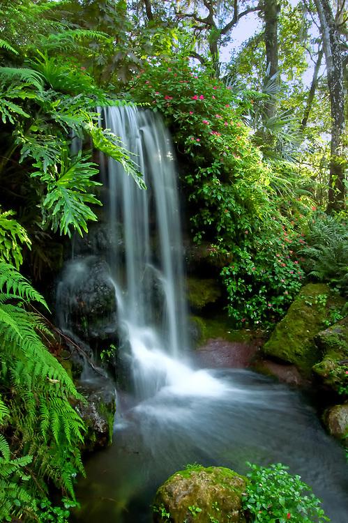 Beautiful natural spring waterfall in North Florida.