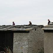Holmhällars fiskebodar.<br /> PHOTO © Bernt Lindgren