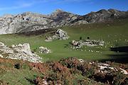 Hiking above Majada de Belbin, a tiny hamlet where they make cheese, in the Picos de Europa