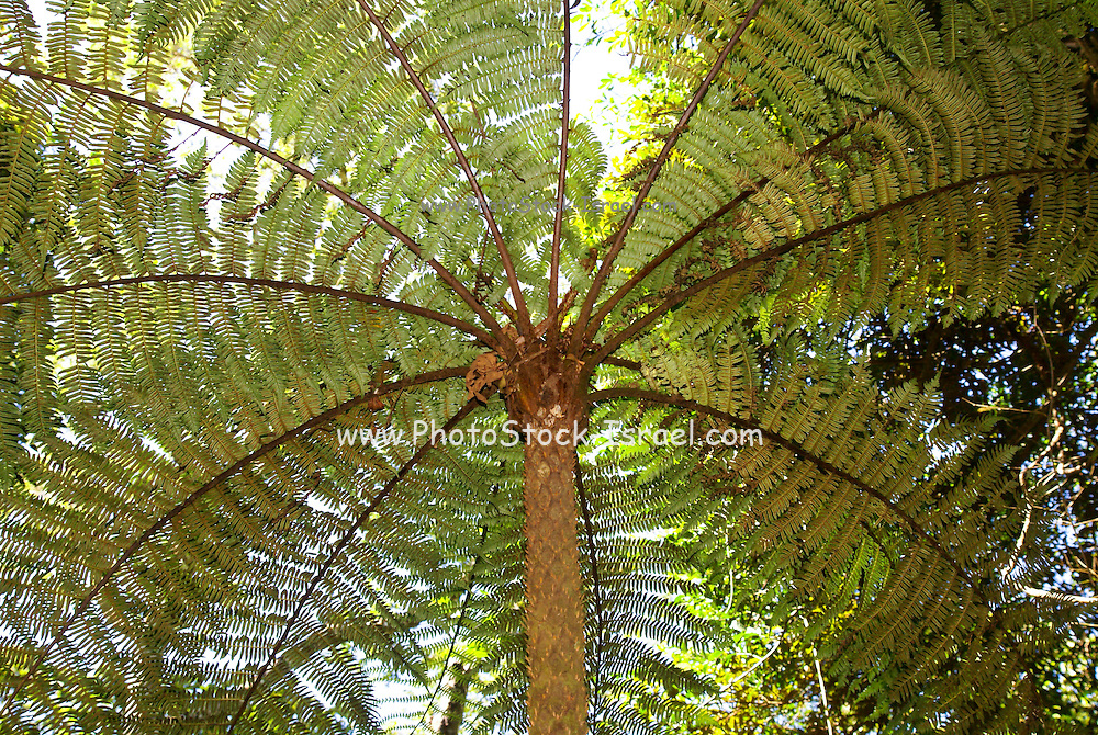 Madagascar, Amber National Park. fern tree