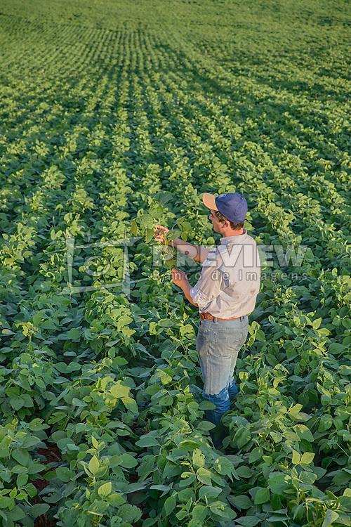 Agricultor inspeciona lavoura de soja, em Campo Mourão no Paraná. FOTO: Jefferson Bernardes/ Agência Preview