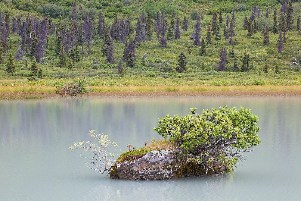 A tiny alpine plant community grows from a rock island in a lake in Donoho Basin, Wrangell-St. Elias National Park, Alaska.