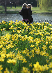 ©London News pictures. 10/03/11.Two women walk past the daffodils. People enjoy the early sunshine in London's St James' Park today (Mon). Picture Credit should read Stephen Simpson/LNP