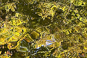 Golden autumn leaves are reflected in the ripples of a pond.
