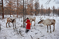 Mongolie, province de Khovsgol, les Tsaatans, éleveurs des rennes, campement en hiver des Tsaatan, jeune garçon en compagie de son renne // Mongolia, Khovsgol province, the Tsaatan, reindeer herder, the winter camp, young boy with his reindeer