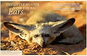 Magazine GEOinternational No. 05/2012, publishes Solvin's story on Bat-eared fox (Otocyon megalotis)
