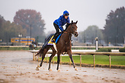 November 1-3, 2018: Breeders' Cup Horse Racing World Championships. Thundersnow