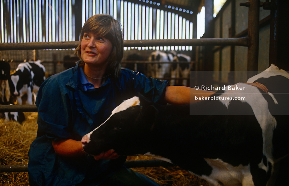 Young lady vet, Diana Stapleton with calf at Manor House Farm, Barnoldswick near Settle, North Yorkshire, England. Nursing a healthy cow in the warmth of the farmer's barn, she has just delivered twin calves and checks on other members of the herd before leaving for another appointment. Diana Stapleton belonged to the Dalehead Veterinary Group based in nearby Settle for 15 years, covering a 20-mile area of 500 remote farms though she specialised in small animals and farmwork before dying suddenly at the age of 39.