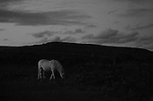 Mountain Ponies at Night