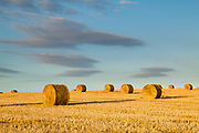 Hay bales catch the evening light, near Wells-next-the-Sea. North Norfolk coast, East Anglia.