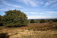 view from the Telegraphen hill in the Wahner Heath, oak tree, Troisdorf, North Rhine-Westphalia, Germany.<br /> <br /> Blick vom Telegraphenberg in der Wahner Heide, Eiche, Troisdorf, Nordrhein-Westfalen, Deutschland.
