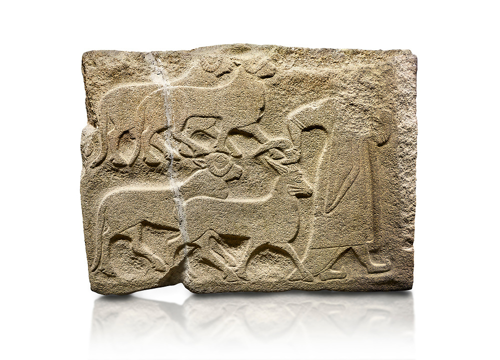Alaca Hoyuk Sphinx Gate Hittite monumental relief sculpted orthostat stone panel. A figure bringing sacrificial animals.  Anatolian Civilizations Museum, Ankara. Turkey<br /> <br /> The figure wearing a long-tailed cloak holds, with the right hand, the horn of the goat coming from behind.  <br /> <br /> Against a white background. .<br />  <br /> If you prefer to buy from our ALAMY STOCK LIBRARY page at https://www.alamy.com/portfolio/paul-williams-funkystock/hittite-art-antiquities.html . Type - Aalca Hoyuk - in LOWER SEARCH WITHIN GALLERY box. Refine search by adding background colour, place, museum etc.<br /> <br /> Visit our HITTITE PHOTO COLLECTIONS for more photos to download or buy as wall art prints https://funkystock.photoshelter.com/gallery-collection/The-Hittites-Art-Artefacts-Antiquities-Historic-Sites-Pictures-Images-of/C0000NUBSMhSc3Oo