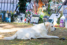 George Michael's beloved dog Abby pines for her late owner at his shrine - 5 Sep 2017