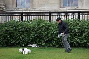 Man picking up his dog poo outside the National Gallery in London, England, United Kingdom.