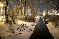 Bialystok, 26.01.2017. Nocny Bialystok pod sniegiem. Po całodobowych obfitych opadach sniegu miasto zostalo przykryte 30 cm warstwa bialego puchu. N/z kaczki na rzeka Biala fot Michal Kosc / AGENCJA WSCHOD