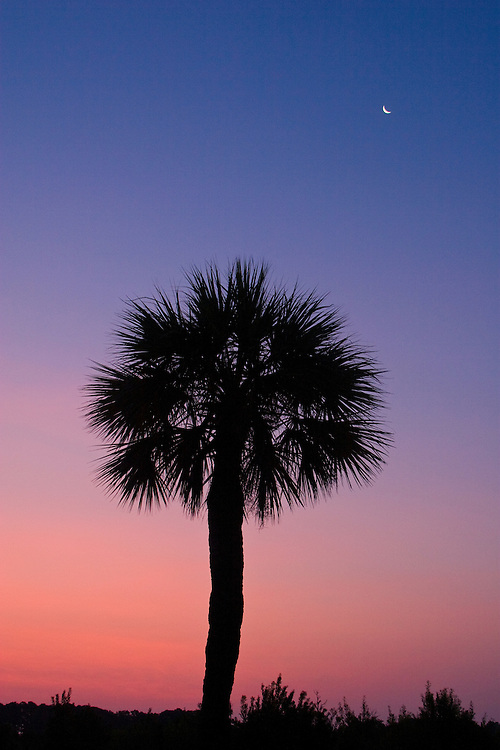 A palmetto tree silhouettes against the dawn sky and crescent moon.