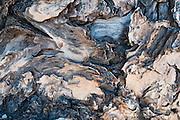 Tree bark, Mount Saint Helens National Volcanic Monument, Skamania County, Washington, USA