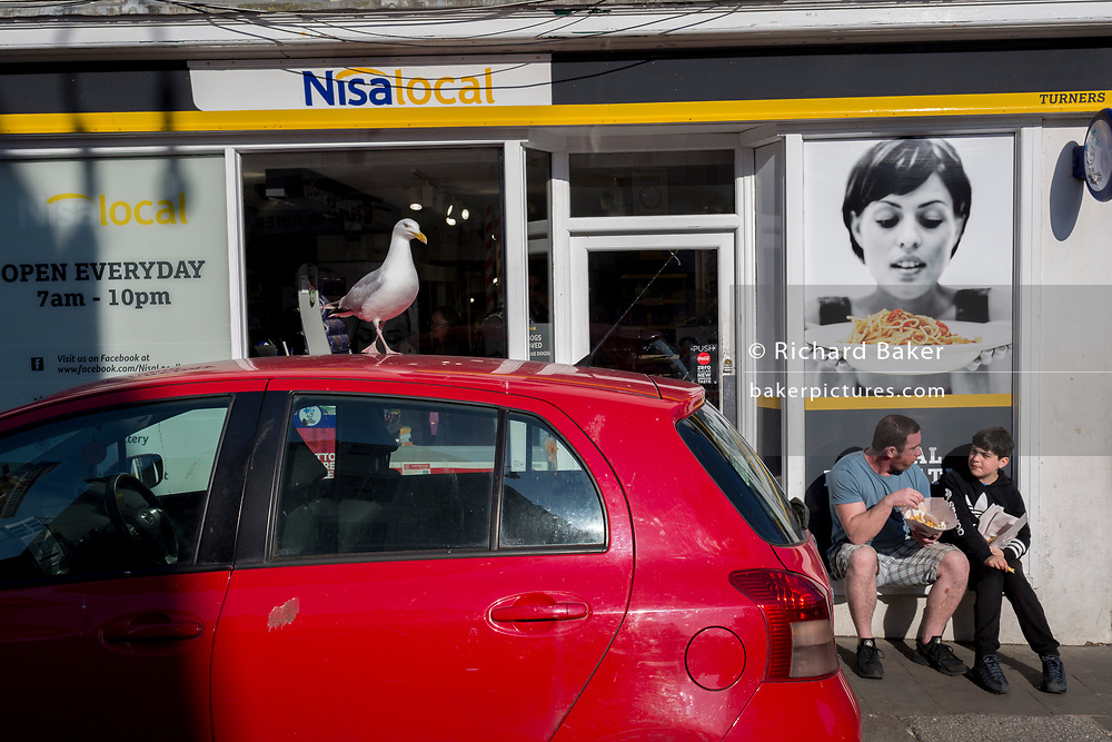 A seagul watches from the height of a car roof, spying a father and son eating chips, on 29th April 2017, at Hastings, East Sussex, England.