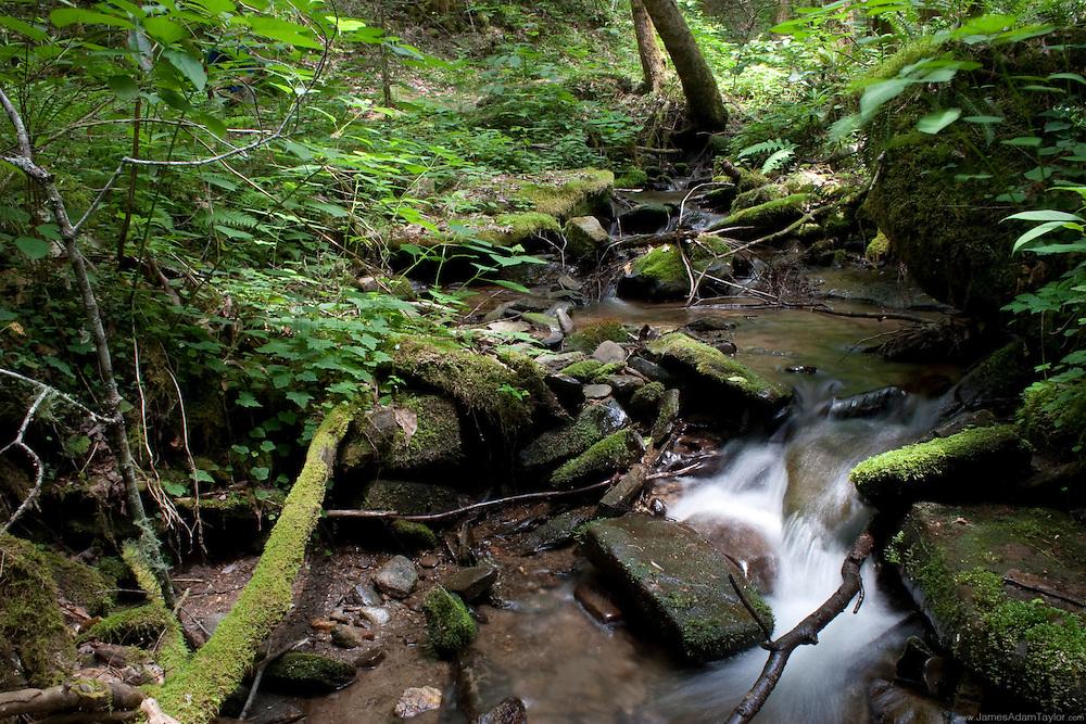 A mountain stream flows over some rocks in Smokey Mountains National Park