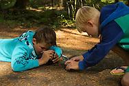 Geconcentreerd proberen twee jeugdige deelnemers aan een Natuurfotowandeling met hun fotomobieltjes een zwarte mestkever te fotograferen.