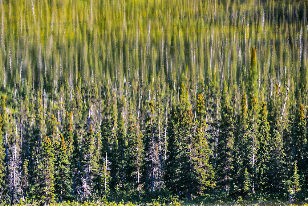 Trees reflect in a pond along the Alaska Highway