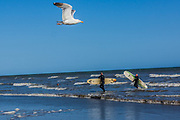 June 3, 2015 - Hastings, England, UK - A seagull flying over the English south eastern coastline town of Hastings as two British surfers leaves the calmed blue waters of the Sea. (Credit Image: © Vedat Xhymshiti/ZUMA Wire)