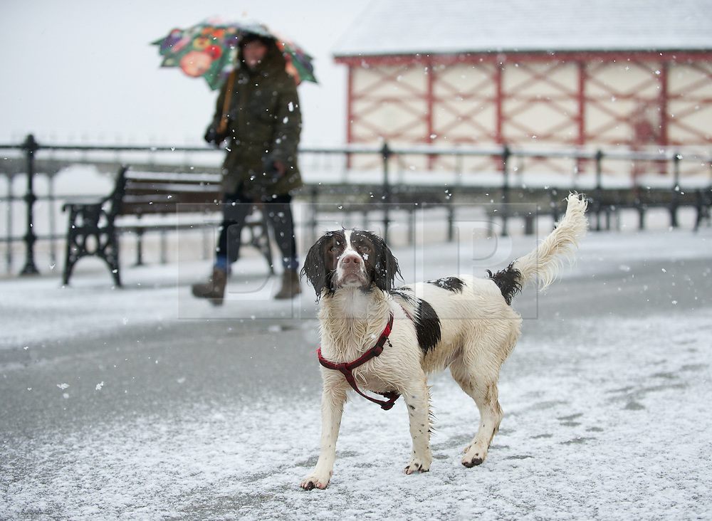 © Licensed to London News Pictures. 14/01/2013..Saltburn beach, Cleveland, England..A woman walks her dog through heavy snow as parts of North Yorkshire and East Cleveland saw heavy snow fall today.  ..Photo credit : Ian Forsyth/LNP