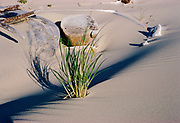CS01606-15.  Beach at Netarts Bay August 1974