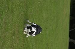 Eddie Sander with his Dogs Jackson and Inka<br /><br />18 June 2004<br /><br />Copyright Paul David Drabble<br /> [#Beginning of Shooting Data Section]<br />Nikon D1 <br /> Focal Length: 125mm<br /> Optimize Image: <br /> Color Mode: <br /> Noise Reduction: <br /> 2004/06/18 09:46:31.2<br /> Exposure Mode: Manual<br /> White Balance: Auto<br /> Tone Comp: Normal<br /> JPEG (8-bit) Fine<br /> Metering Mode: Center-Weighted<br /> AF Mode: AF-S<br /> Hue Adjustment: <br /> Image Size:  2000 x 1312<br /> 1/200 sec - F/7.1<br /> Flash Sync Mode: Front Curtain<br /> Saturation: <br /> Color<br /> Exposure Comp.: 0 EV<br /> Auto Flash Mode: External<br /> Sharpening: Normal<br /> Lens: 80-200mm F/2.8<br /> Sensitivity: ISO 200<br /> Image Comment: <br /> [#End of Shooting Data Section]