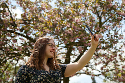 © Licensed to London News Pictures. 09/05/2021. London, UK. A woman takes a selfie with a cherry blossom tree in Finsbury Park, north London. According to the Met Office, a temperature of 20 degrees celsius is expected on Sunday.  <br /> <br /> *** Permission Granted *** <br /> <br /> Photo credit: Dinendra Haria/LNP