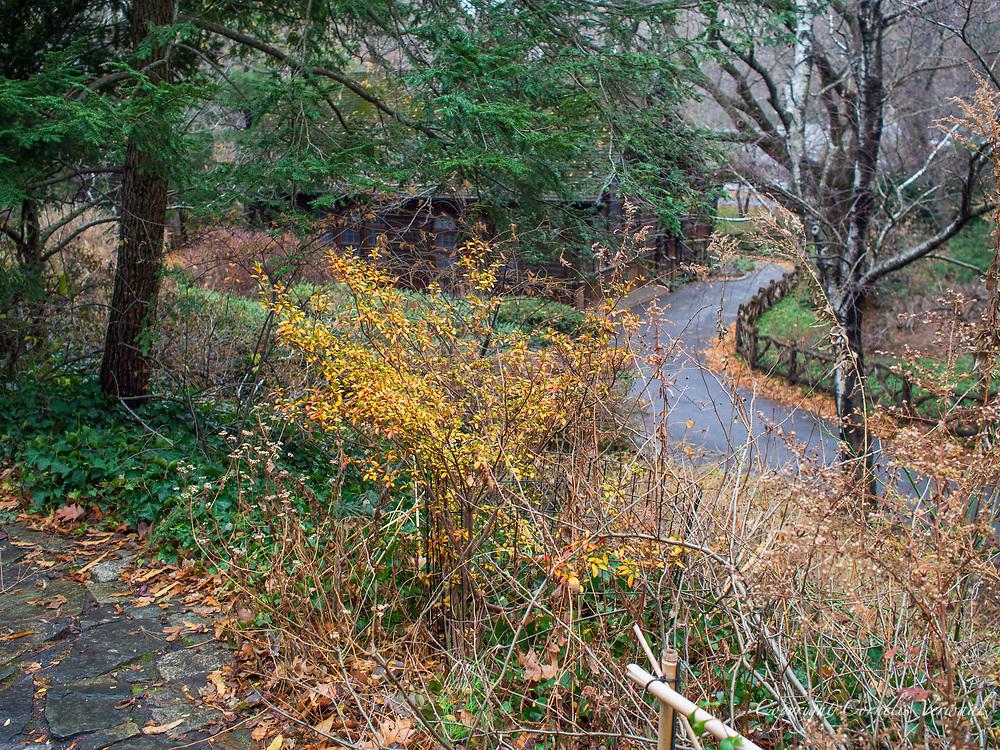 Landscape near Swedish Cottage in Central Park