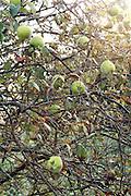 wild fruit