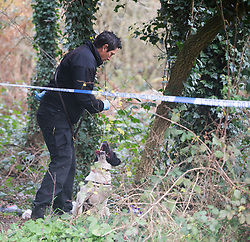 ©Licensed to London News Pictures 07/12/2019.<br /> Dartford,UK. A police dog is used to look for evidence in the woods.  A large police cordon is in place around woodland at Dartford Heath, Dartford,Kent. <br /> According to Local media Kent police are investigating the rape of a woman on Thursday 5th December. Police arrived at the scene yesterday afternoon (6th December).<br /> Photo credit: Grant Falvey/LNP