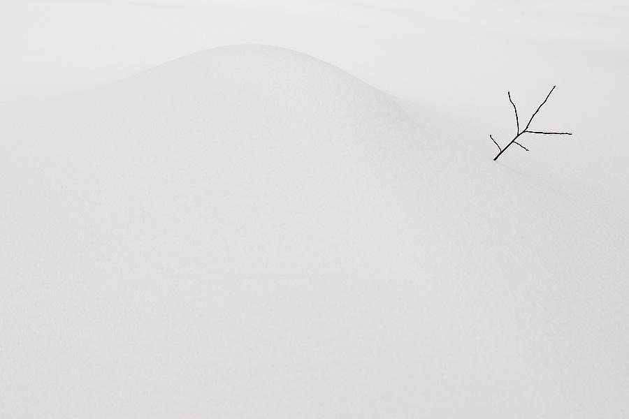 A lone branch pokes through the snow on the slopes of Mount Persis, Glacier Peak Wilderness, Washington.