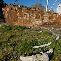 Whale bones lie beside grounded boats at Grytviken, a recently-abandoned British whaling station by  Cumberland Bay, South Georgia, Antarctica.