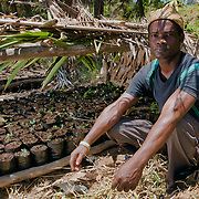 Tovolah Michael Cyrille, chief of Andranokoditra village, shows a make shift greenhouse where his village is growing saplings for replanting to reforest parts of his villages homeland. Madagascar