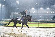 November 1-3, 2018: Breeders' Cup Horse Racing World Championships. Next Shares