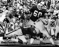 Oakland Raiders Otis Sistrunk and Art Thoms get after the QB..<br />(photo Nov 17,1973 by Ron Riesterer)