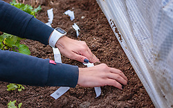 THEMENBILD - eine Frau beim einsetzen von Saatbänder, aufgenommen am 10. April 2018 in Kaprun, Österreich // a woman using seed ribbons, Kaprun, Austria on 2018/04/10. EXPA Pictures © 2018, PhotoCredit: EXPA/ JFK