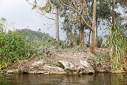 Guano On Bird Island