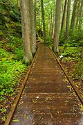Trail of the Cedars, Glacier National Park, Montana USA