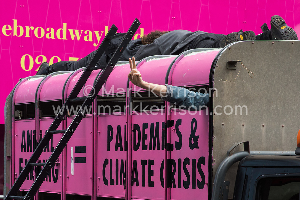 Animal rights activists from Animal Rebellion lock themselves to the top of and inside a pink slaughterhouse truck in order to block the road outside the Department of Health and Social Care on 3 September 2020 in London, United Kingdom. Animal Rebellion activists are protesting in solidarity with victims of the global food system and to demand that the UK transitions to a sustainable plant-based food system.