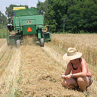 Ami Gignac inspects what remains after the combine harvests the first of the Warthog hard red winter wheat.
