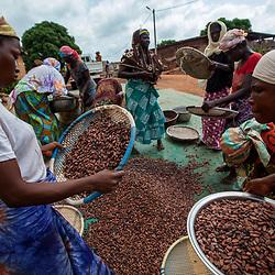 Cocoa production, Cote d'Ivoire