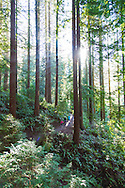 Portland's Forest Park is the largest urban forest in the United States.  The Wildwood Trail, designated as a National Recreational Trail, is 30.2 miles in length and runs from the southern end of the Vietnam Memorial at the Oregon Zoo to the NW terminus of the trail at Newberry Road.
