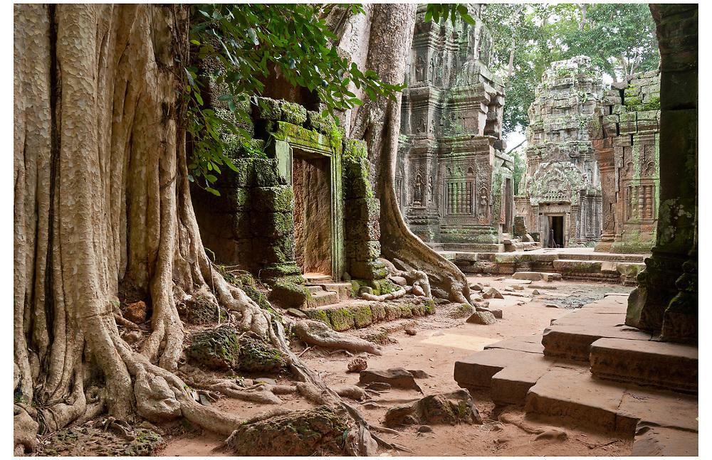 Ta Prohm, Siem Reap, Cambodia.