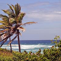 Ocean peak between Cattlewash and Bathsheba Beach on the east coast of Barbados in the Caribbean.