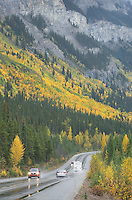 Fall color along the Icefields Parkway, Banff National Park