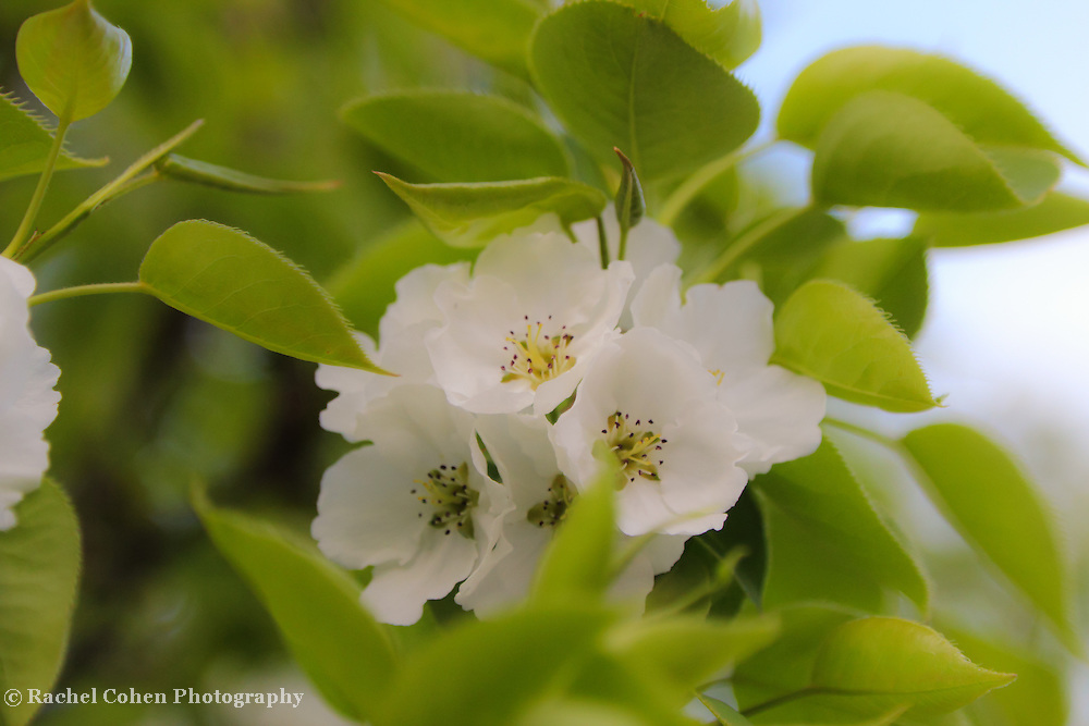 """Tenderness""<br /> <br /> Flowers by Rachel Cohen"